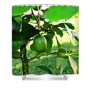 First Avocado Shower Curtain