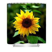 First In Bloom Shower Curtain