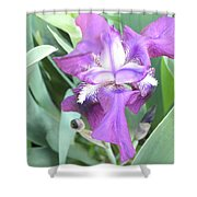 First Iris Of The Spring Shower Curtain