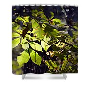First Morns Light Shower Curtain