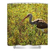 First Year White Ibis Shower Curtain
