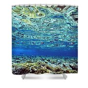 Fish And Coral Underwater Reflected In Shower Curtain