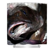 Fish Catch Shower Curtain