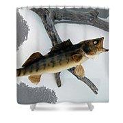 Fish Mount Set 02 Bb Shower Curtain