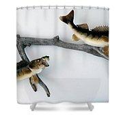 Fish Mount Set 03 A Shower Curtain
