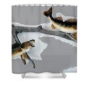Fish Mount Set 03 C Shower Curtain