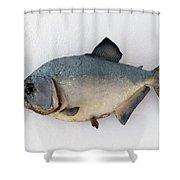 Fish Mount Set 04 A Shower Curtain