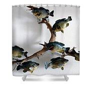 Fish Mount Set 05 A Shower Curtain