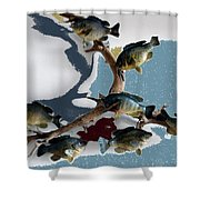 Fish Mount Set 05 B Shower Curtain