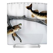 Fish Mount Set 06 A Shower Curtain