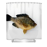 Fish Mount Set 08 A Shower Curtain