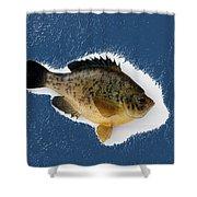 Fish Mount Set 08 C Shower Curtain