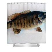 Fish Mount Set 10 A Shower Curtain