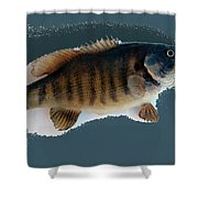 Fish Mount Set 10 B Shower Curtain
