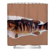 Fish Mount Set 11 B Shower Curtain