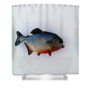 Fish Mount Set 12 A Shower Curtain
