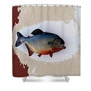 Fish Mount Set 12 C Shower Curtain