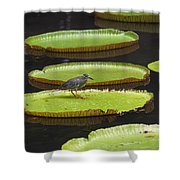 Fisher Bird On Giant Lily Pad In Pond Shower Curtain