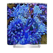 Fishie And The Sea Anemone Shower Curtain