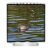 Fishing For Breakfast Shower Curtain