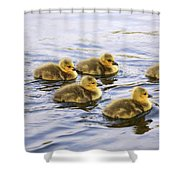 Five Goslings In The Water Shower Curtain