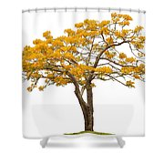 Flam Of The Forest Shower Curtain