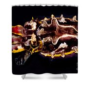 Flamboyant Cuttlefish Shower Curtain