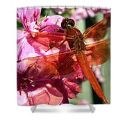 Flame Skimmer Dragonfly Shower Curtain