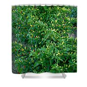 Flame Up Shower Curtain