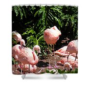Flamigo Gathering Shower Curtain