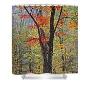 Flaming Fall Foliage Shower Curtain