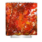 Flaming Maples Shower Curtain