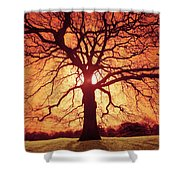 Flaming Oak Shower Curtain