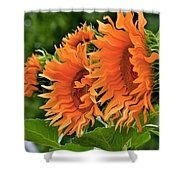 Flaming Sunflowers Shower Curtain