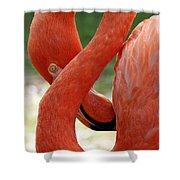 Flamingo Eight Shower Curtain