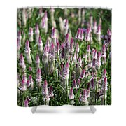 Flamingo Feather Flowers Shower Curtain
