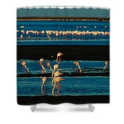 Flamingo Gathering Shower Curtain
