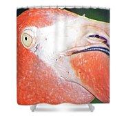 Flamingo Nose Shower Curtain