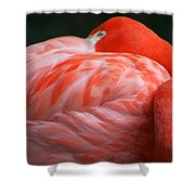 Flamingo Taking A Snooze Shower Curtain