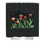 Flared Red Yellow Tulips Shower Curtain