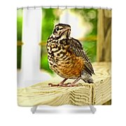 Fledling Robin Shower Curtain