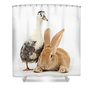Flemish Giant Rabbit And Call Duck Shower Curtain