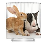Flemish Giant Rabbit And Miniature Bull Shower Curtain