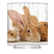Flemish Giant Rabbit With Guinea Pigs Shower Curtain