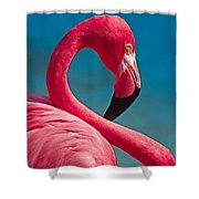 Flexible Flamingo Shower Curtain