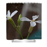 Flight Of The Bee Shower Curtain