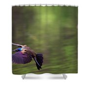 Flight Of The Grackle Shower Curtain
