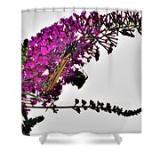 Float Like A Butterfly Sting Like A Bee Shower Curtain