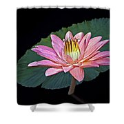 Floating Water Lily Shower Curtain