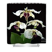 Flock Of Dendrobium Shower Curtain